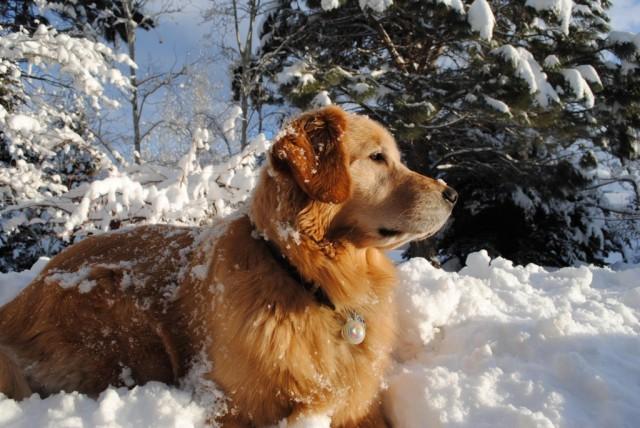 Tupelo-Snow-BEST-1024x685