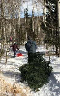 rox-sledding-tree